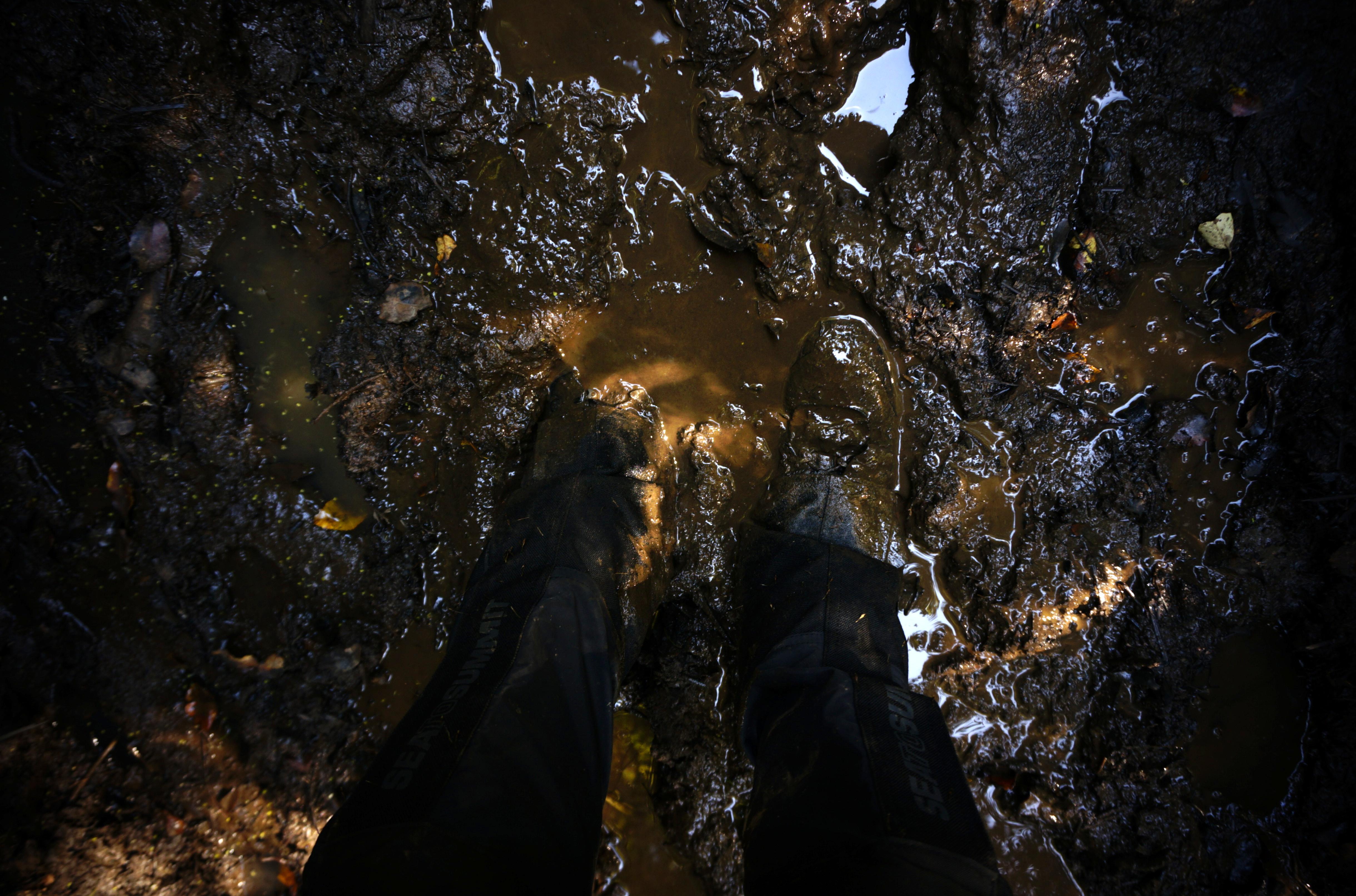 muddy feed